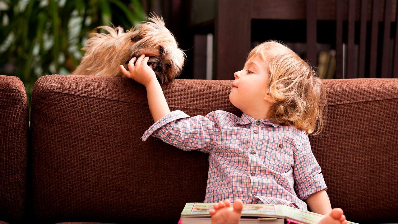 Criança cachorro sofá DogDicas