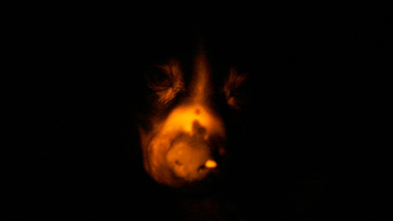 Ruppy, uma cadela com luz própria